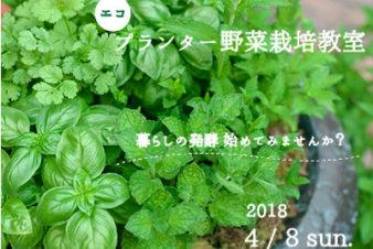 プランター栽培教室新(小)