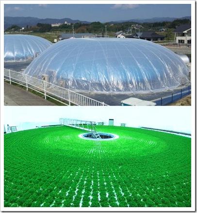 Minami_Soma_Solar_Agri_Park_3